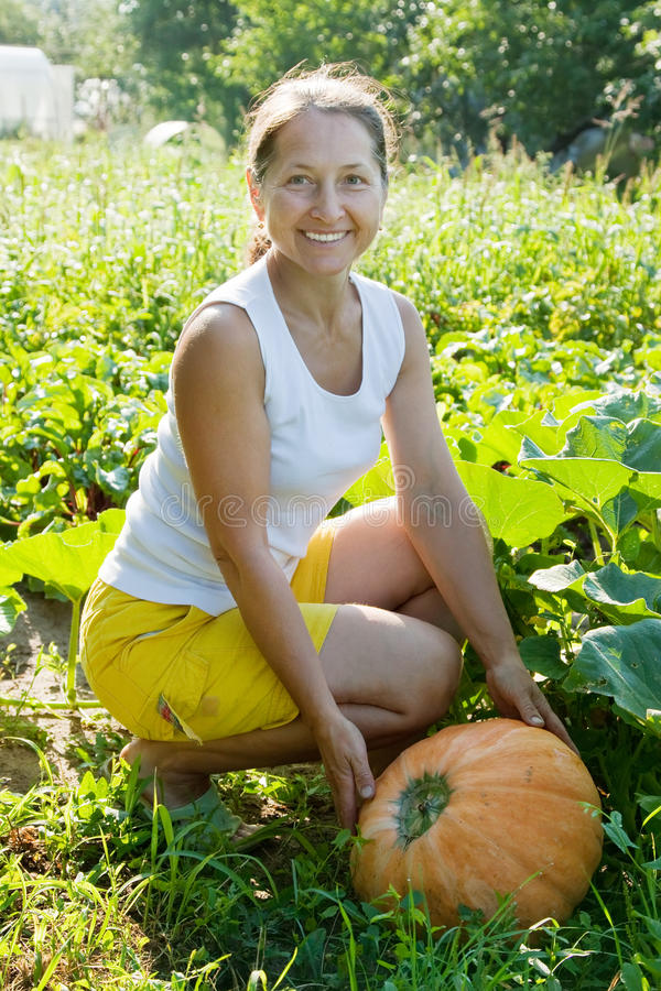 Woman picking vegetable marrow stock images