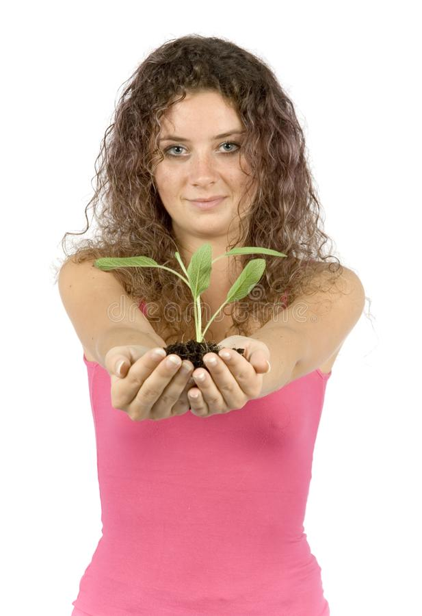 Download Woman with plant stock photo. Image of hand, build, closeup - 1134386