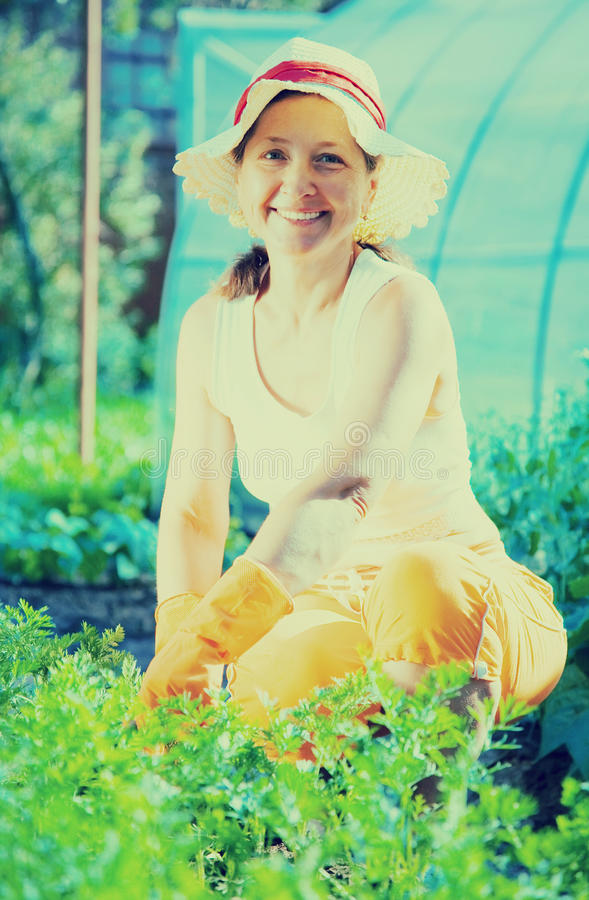 Woman in plant of carrot stock photography