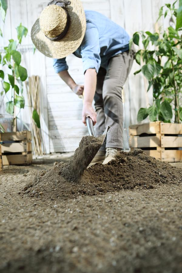 Woman plant in the vegetable garden, work by digging spring soil with shovel, near boxes full of green plants stock photo