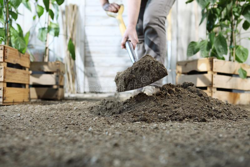 Woman plant in the vegetable garden, work by digging spring soil with shovel, near wooden boxes full of green plants royalty free stock image