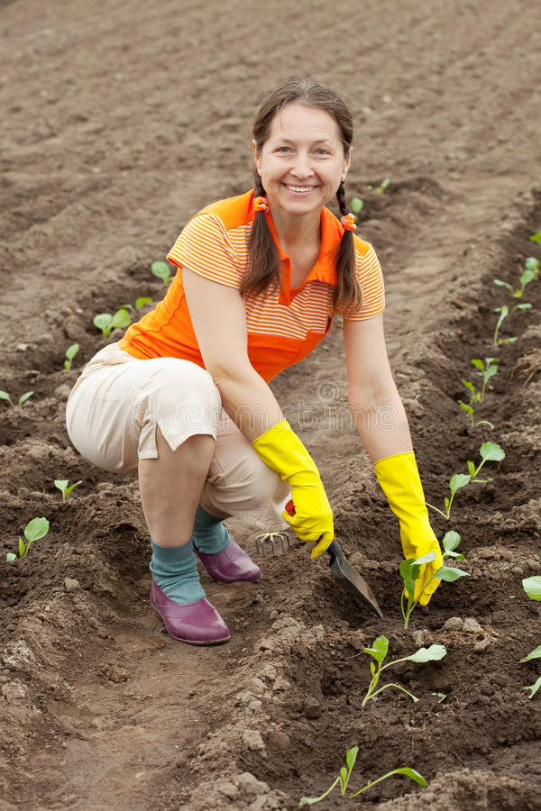 Woman planting cabbage seedling