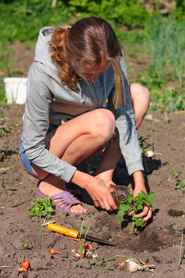 Download Woman Planting A Tomato Plant In The Garden Stock Photo - Image of nature, farm: 20335484