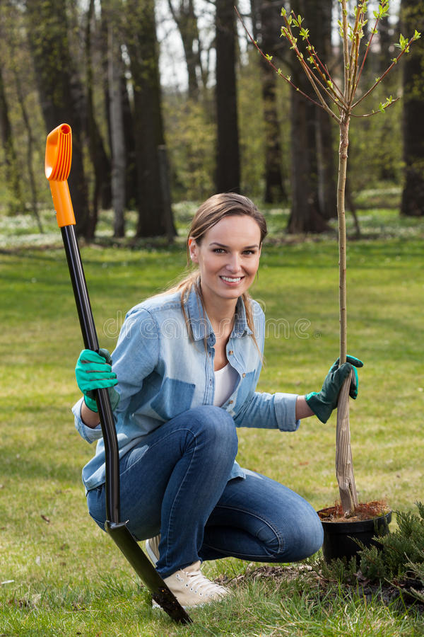 Woman planting young tree stock image
