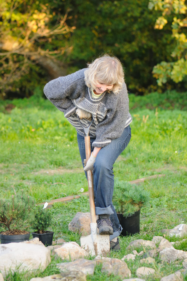 The woman plants trees stock images