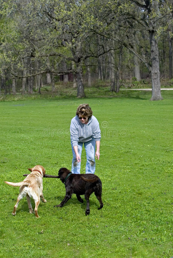 Woman Playing With Dogs Royalty Free Stock Photo