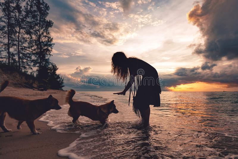 Woman playing with dogs on the beach at sunset royalty free stock photos