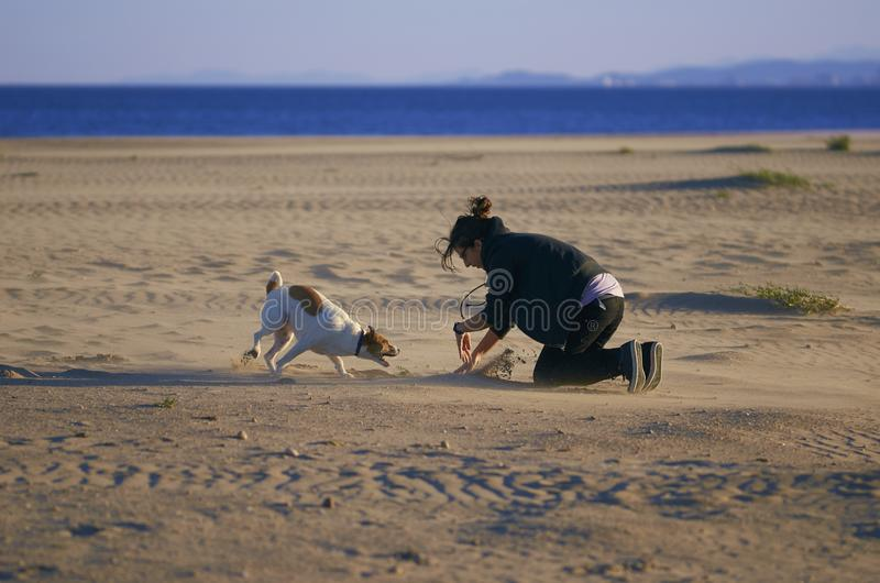 Woman playing with her dogs on a beach stock image