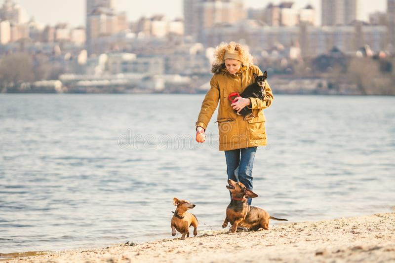 Woman plays with dogs. Pets and dogs training and educating dogs. Companion pets concept. Companion pets concept. dog royalty free stock photo