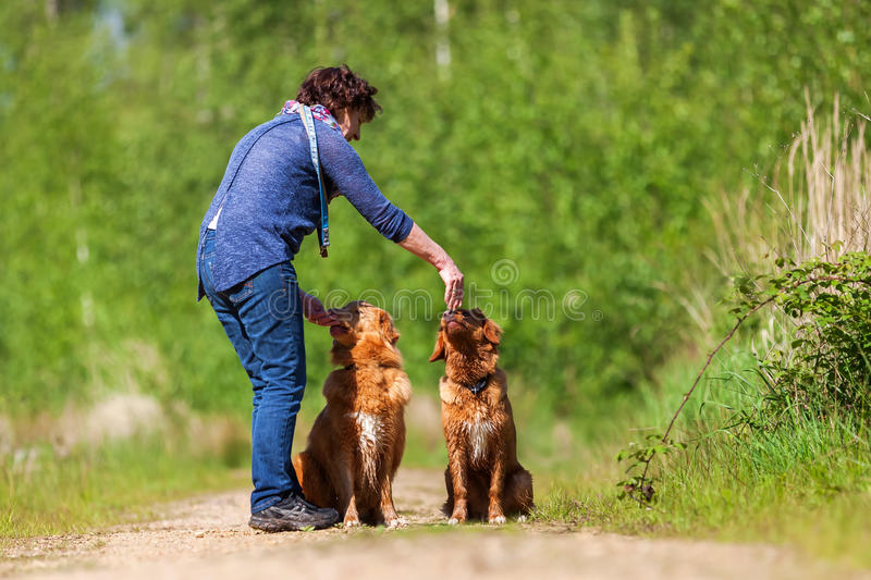 Woman plays with Nova Scotia duck tolling retriever royalty free stock image