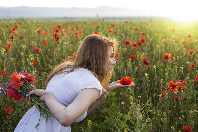 Woman in poppy field smelling one poppy flower royalty free stock photo