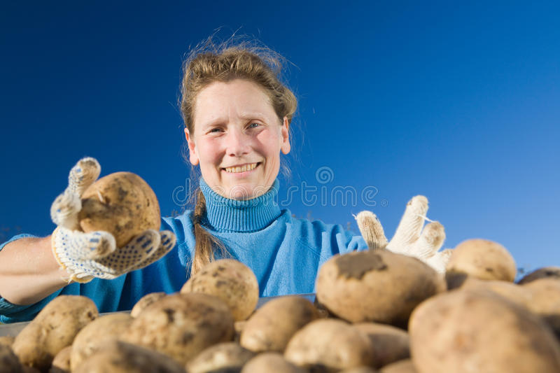 Woman with potato stock images