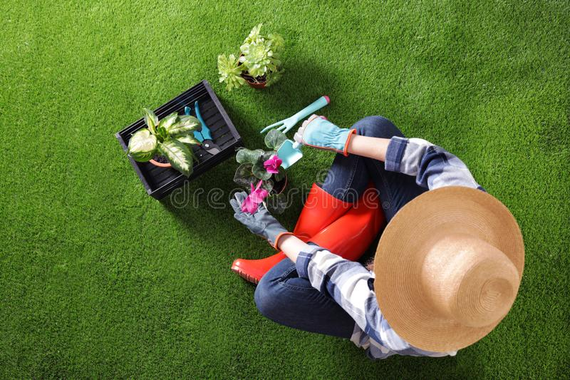 Woman potting flower on green grass. Home gardening royalty free stock photo