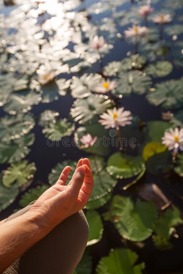 Woman practices yoga on a lake with lotus water lilies.  royalty free stock photography