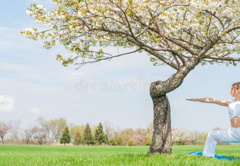 Woman is practicing yoga, doing Virabhadrasana exercise, standing in Warrior pose near tree. Beautiful woman is practicing yoga, doing Virabhadrasana exercise stock photography