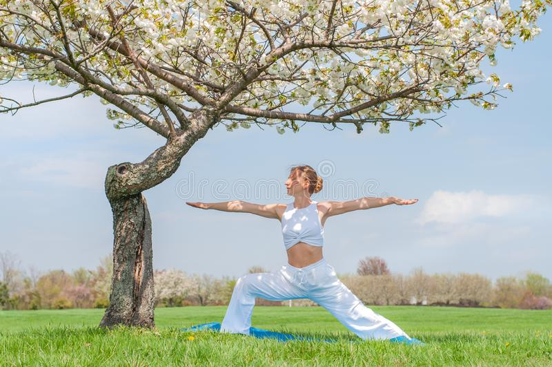 Woman is practicing yoga, doing Virabhadrasana exercise, standing in Warrior pose near tree. Beautiful woman is practicing yoga, doing Virabhadrasana exercise stock image