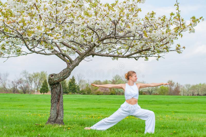 Woman is practicing yoga, doing Virabhadrasana exercise, standing in Warrior pose near tree. Beautiful woman is practicing yoga, doing Virabhadrasana exercise royalty free stock image