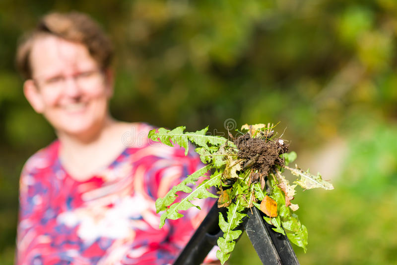 Download Woman Pulling Weeds Stock Photos - Image: 33386123