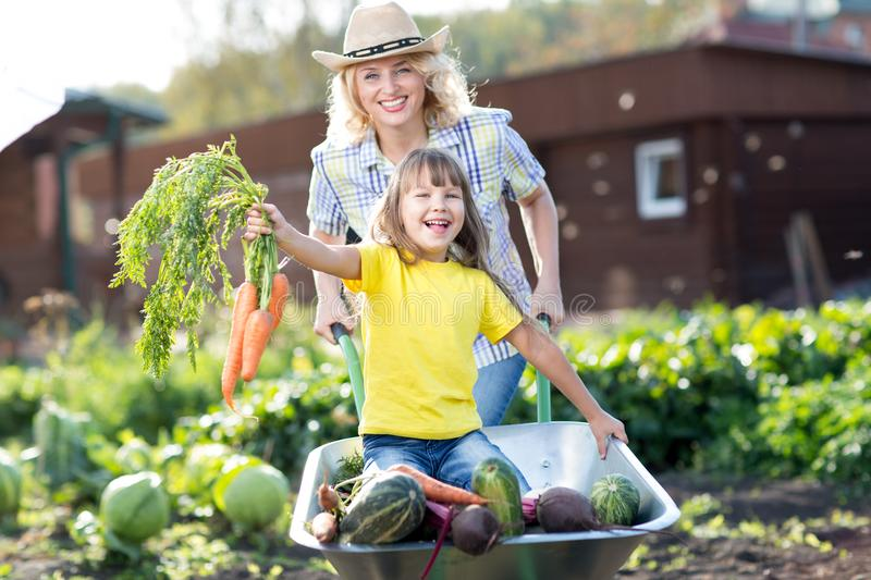 Woman pushing her child daughter in a wheelbarrow filled vegetables in the garden stock image