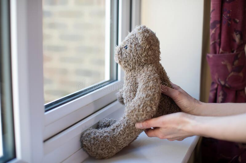 Woman Putting Teddy Bear In Window At Home For Bear Hunt Game During Coronavirus Pandemic To Entertain Children. Woman Puts Teddy Bear In Window At Home For Bear royalty free stock image