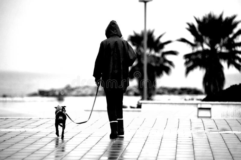 Woman in the rain. Civitavecchia Italy bad weather: a lady with her dog on a leash walks sols in the pouring rain