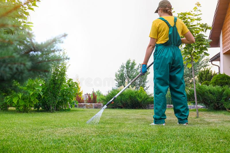 Woman raking green lawn at backyard. Home gardening. Woman raking green lawn at backyard outdoors. Home gardening royalty free stock images
