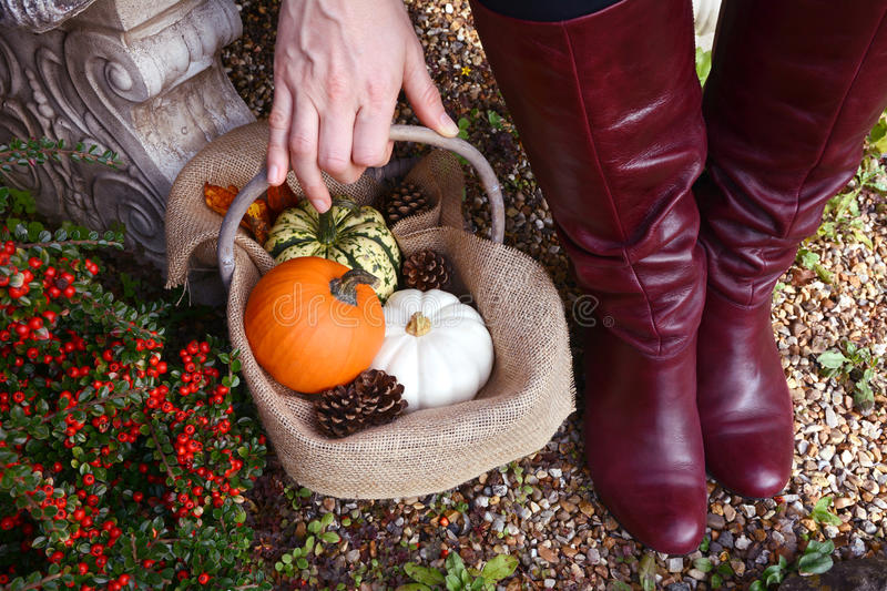 Woman in red boots picking up basket of fall gourds stock image