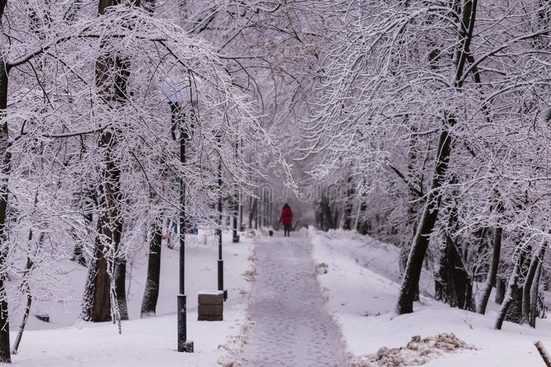 Woman in red with dog on winter alley in park on a snowy day. Forest, landscape, nature, road, white, cold, frost, natural, path, scene, season, tree royalty free stock photography