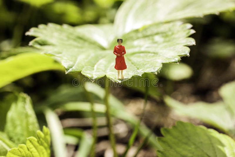 Download Woman in red on a leaf stock photo. Image of pics, energy - 31081008