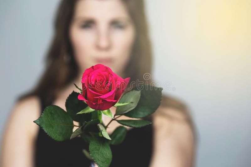 Woman with a red rose in her hand close-up, romantic valentines concept stock images