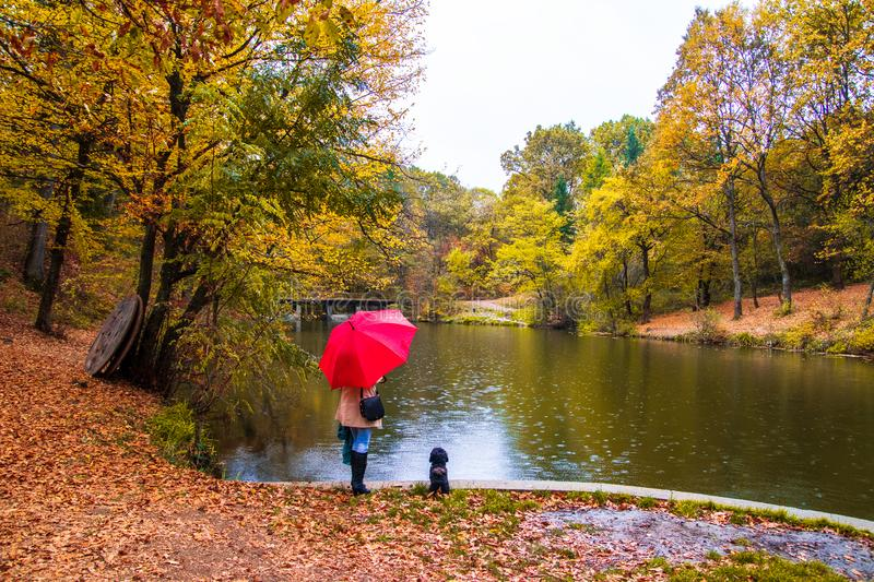 Woman with red umbrella and small dog standing next to the small lake at autumn stock photo