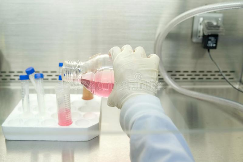 The woman researcher transfer a liquid medium culture to centrifuge tube to do the lab test. stock photos