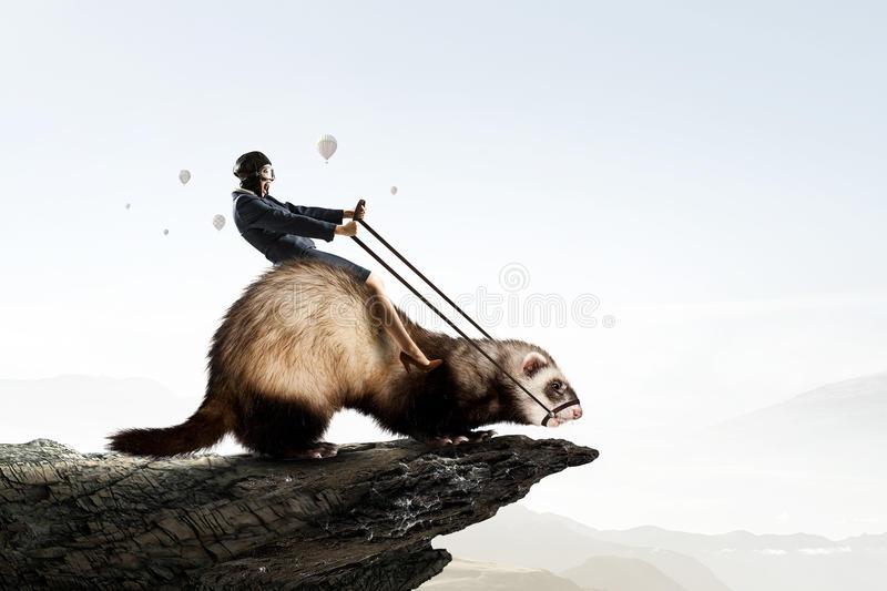Woman ride ferret. Young pretty fearless woman riding ferret animal stock image