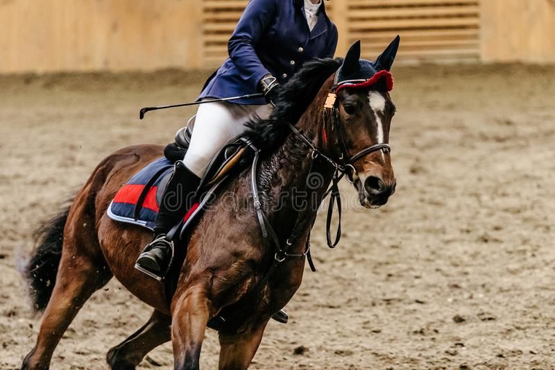 Woman rider in horse. Show jumping competition stock photo