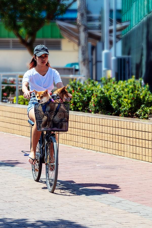 Woman Riding Bicycle With Dog in Basket stock photography