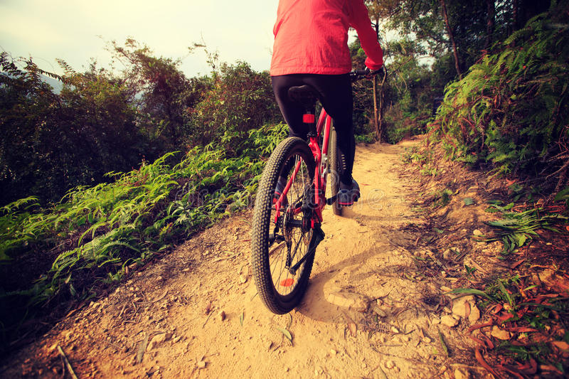 Woman riding bike on forest mountain trail stock photography