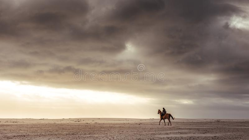 Woman riding with her stallion on the beach stock photography