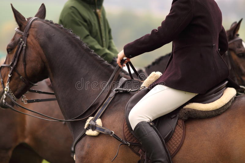 Woman riding horse 1 stock photos
