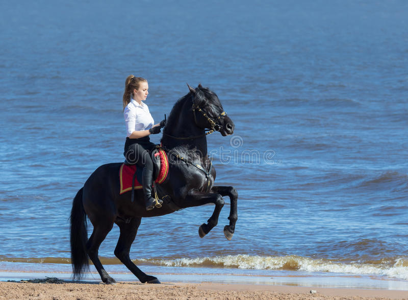 Woman riding horse on beach of sea. Stallion stands on hind legs royalty free stock image