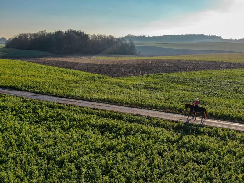 Woman riding a horse on a little road surrounded by green farmland during morning summer. stock images