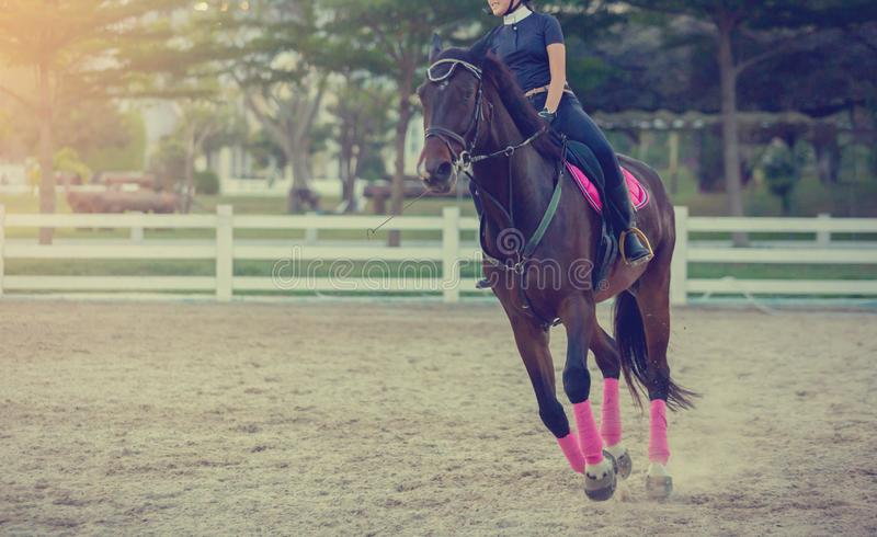 Woman riding on a horse. Young woman enjoy to riding on a horse stock photography