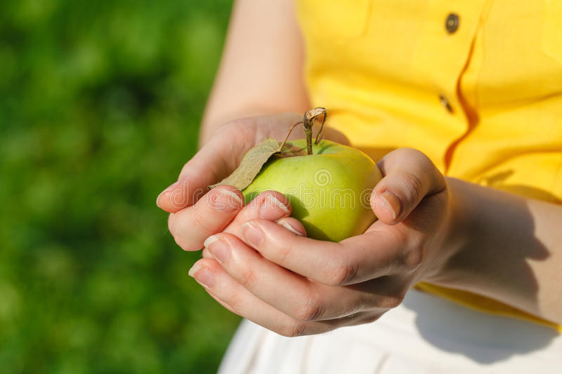 Woman with ripe apples stock image
