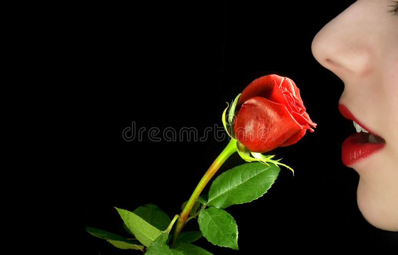 Woman with rose stock photography