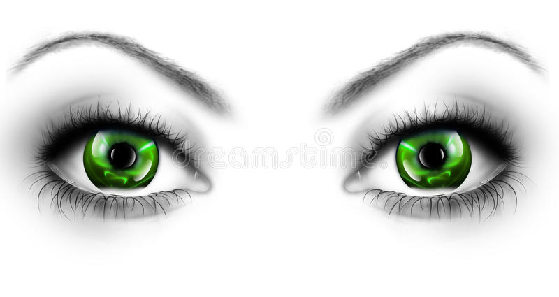 Woman's eyes. Beautiful woman's eyes isolated on a white background royalty free illustration