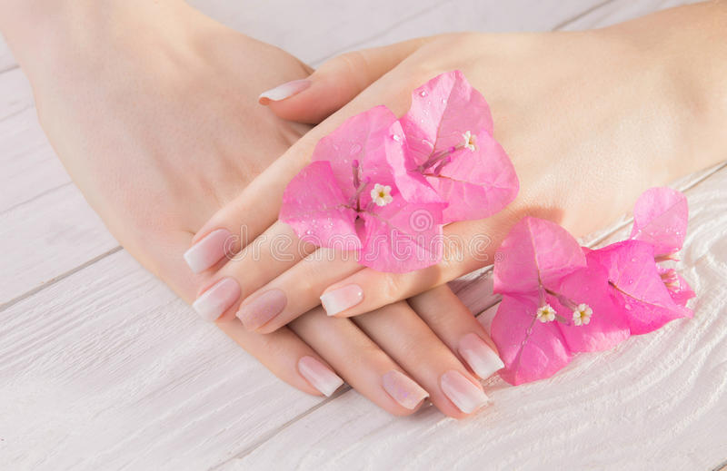 Woman`s french ombre manicure stock photography