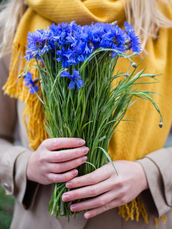 Woman`s hand with flowers, cornflower bouquet on female hand royalty free stock images
