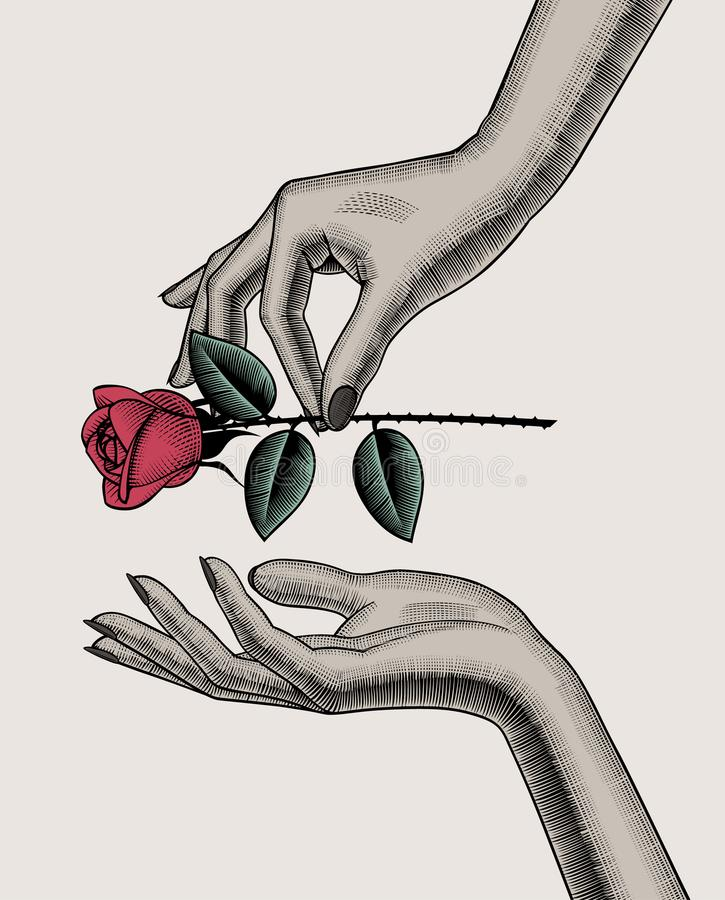Woman`s hand give red rose into other hand vector illustration