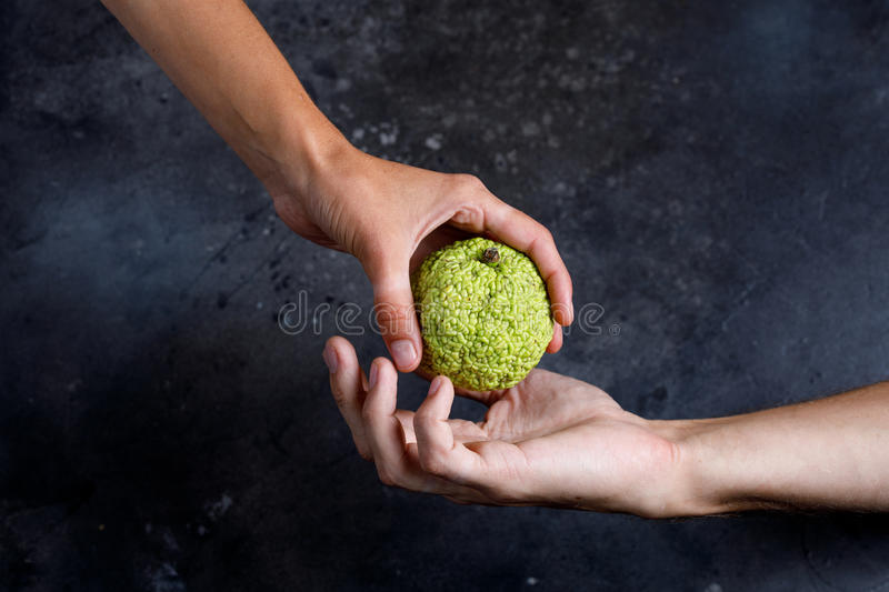 Woman`s hand gives the apple to the man`s hand. Hands holding a Adam`s apple. stock image