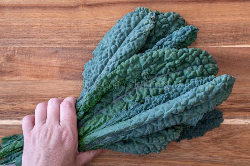 Woman's hand holding a bunch of dark green, crinkly, Lacinato Kale leaves, on a wood cutting board royalty free stock photography