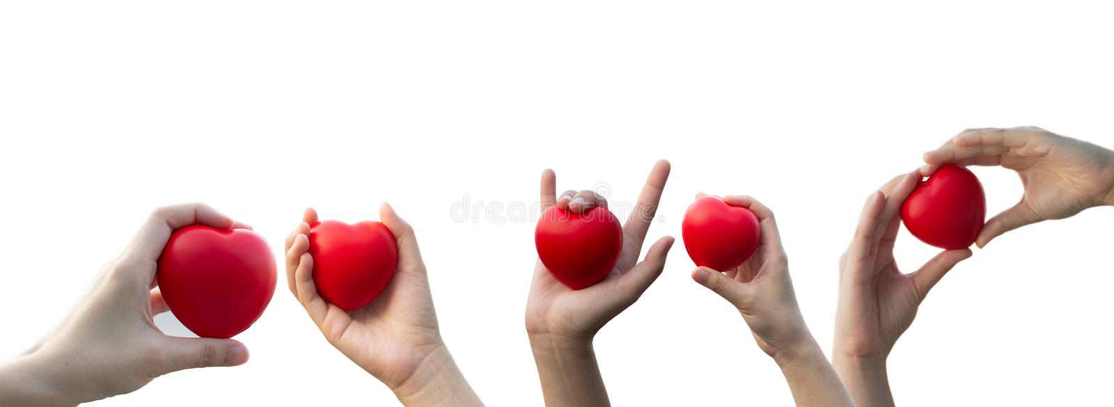 Woman`s hand holding a red heart on Isolated white background. stock images
